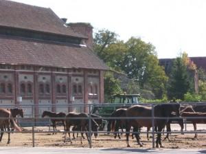 Pferde auf einem Hof eines großen Backsteingebäudes
